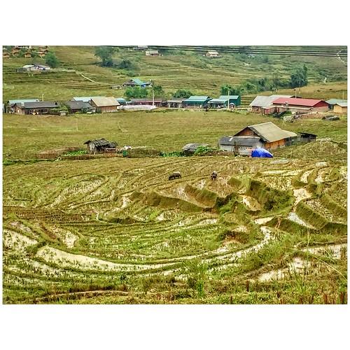 Rice terraces, Hmong village, Sapa, Vietnam