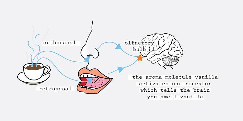 Khoa học cảm quan về mùi hương cà phê