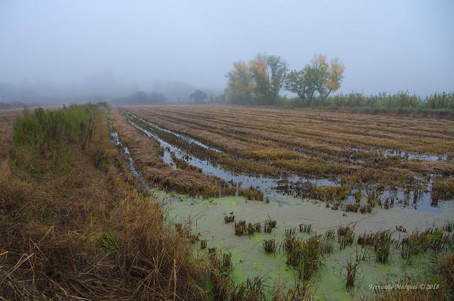 Autumn mist, Pentax K-5, smc PENTAX-DA* 16-50mm F2.8 ED AL [IF] SDM