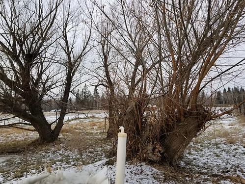 20181114.septic.outflow.willows