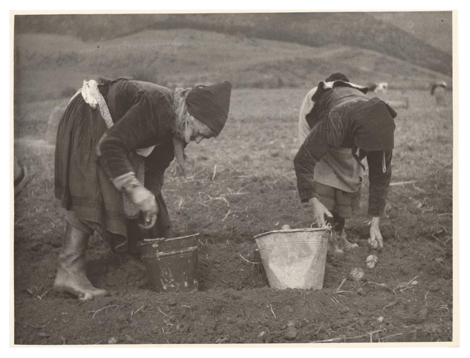 1940. Плохой урожай