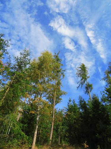 20170930 03 112 ostbay Wolken Herbst Wald Bäume Weg
