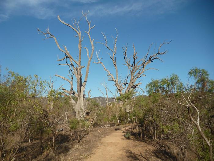 Nelshaby Reserve - Lawrie Park.