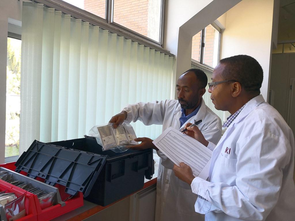 Packing forage seed samples at ILRI Genebank