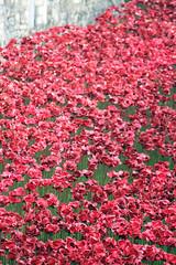 2014 11 Poppy Tower of London edit