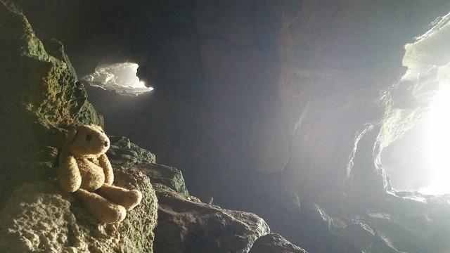 8 Cave Bear