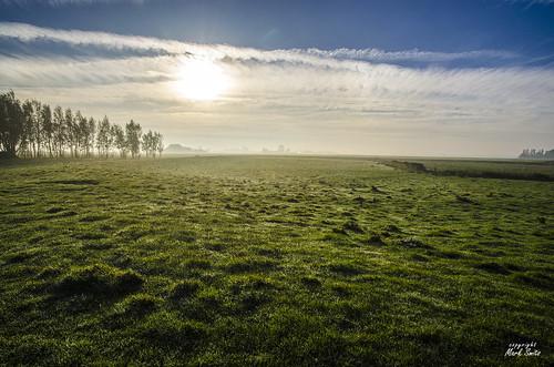 NL - Friesland - Kollumerpomp - Dewy Morning