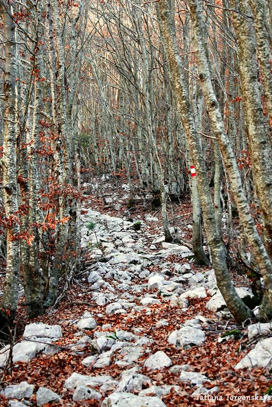 Старая дорога, проходящая по буковому лесу