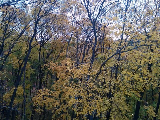 Around Castle Frank (5) #toronto #castlefrank #rosedale #bloorstreet #bloorstreeteast #fall #autumn #yellow #leaves #ravine #evening