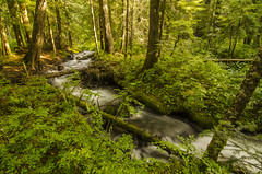 Camp Creek Campground, OR