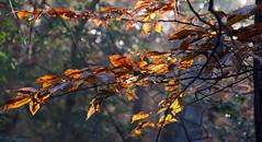 last color of autumn