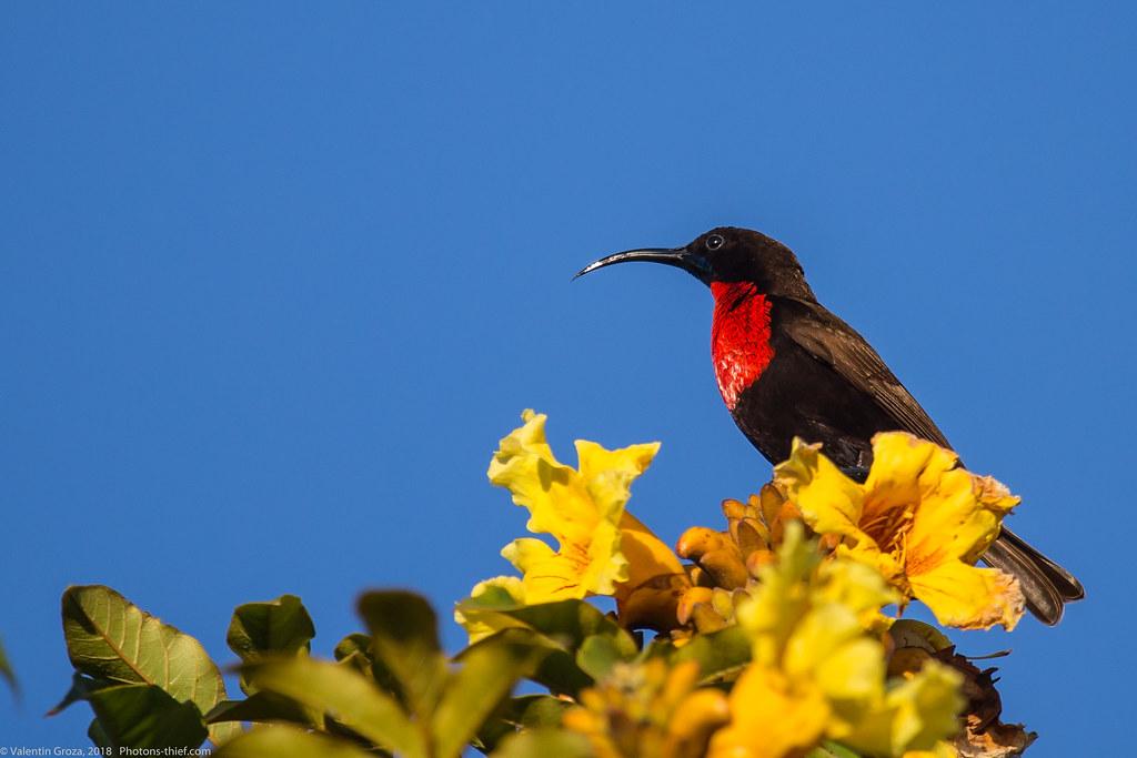 Lake_Naivasha_Kenya_sep18_11_sunbird