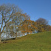 008-20181118_Mid Glamorgan-trees in field on E side of Coed Coesau-whips (SW of Crynant Farm)