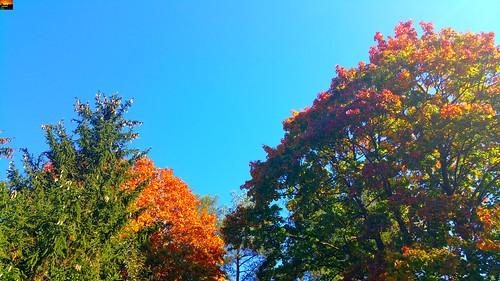 Herbstmorgen in Oberschwaben in Süddeutschland –   Autumn morning in Upper Swabia in southern Germany –  Matin d'automne en Haute-Souabe, dans le sud de l'Allemagne