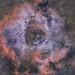 NGC 2244 Rosette Nebula Bi-Colour