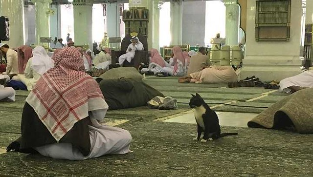 4959 What are the Islamic teachings related to Cats 03
