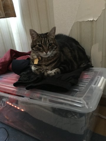 Tigger's New Nest
