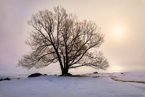 maine fog winter winterfog mist snow landscape nature tree silhouette wassookeag lake ice pond lakewassookeag dextermaine penobscotcounty newengland sunrise morning morningfog morningmist
