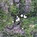 Tiny mushrooms in moss on tree trunk