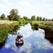River Chelmer Navigation near Paper Mill Lock, 19th June 1994