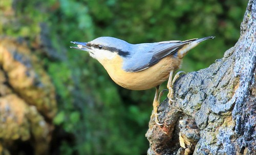 NUTHATCH  EXPLORED