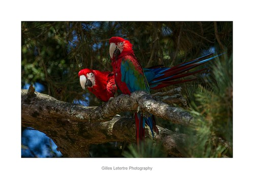 perch of parrots
