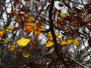 autunno a Canfaito