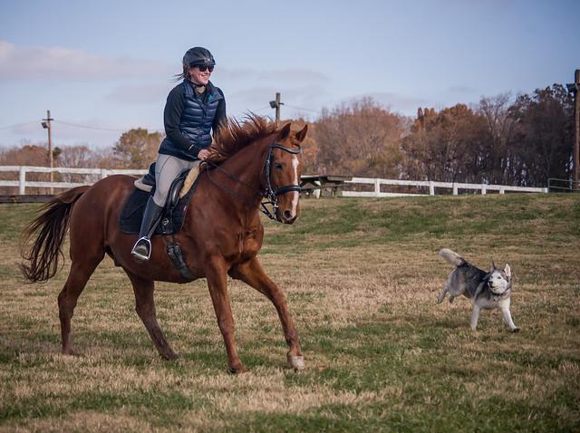 20181116 Austen's Ponies_46