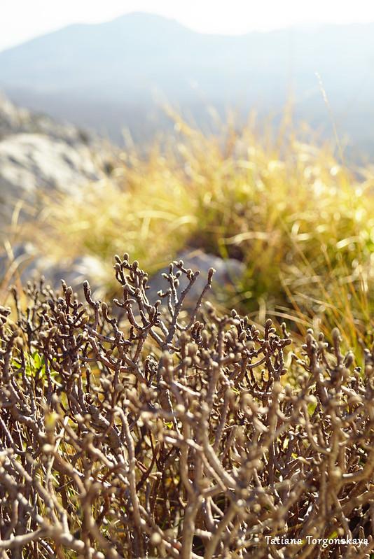Растения на вершине