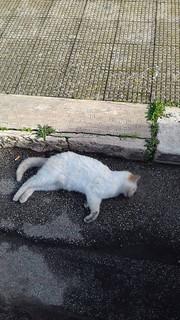 gatto ucciso casamassima