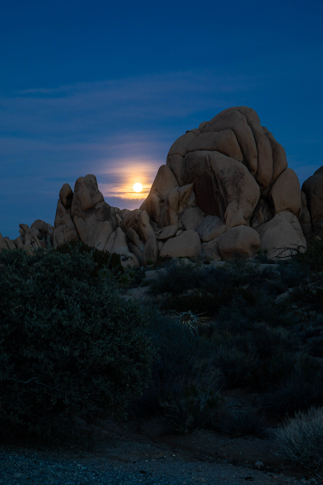 11.22. Joshua Tree National Park