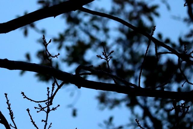 Blue November VI