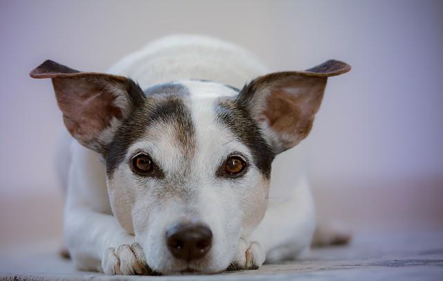 健康診断を受ける必要のある犬