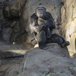 LA Zoo Winter 2018 -312