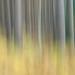 Painted Pines Portrait