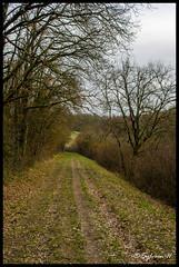 Petit sentier en sous-bois à Bouloc
