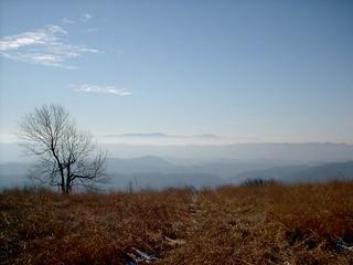 Chestnut Ridge in Winter
