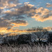 Reedbed, Late Winter Afternoon