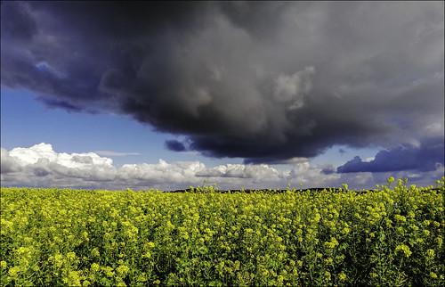 Champs nuageux