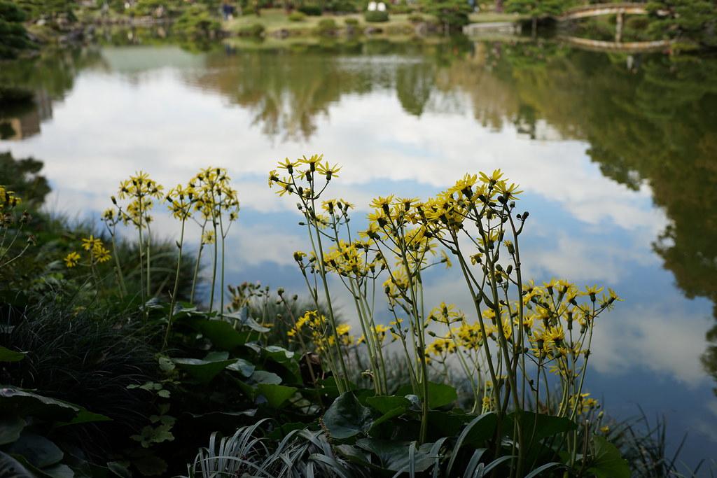 Yellow Flower_Kiyosumi garden
