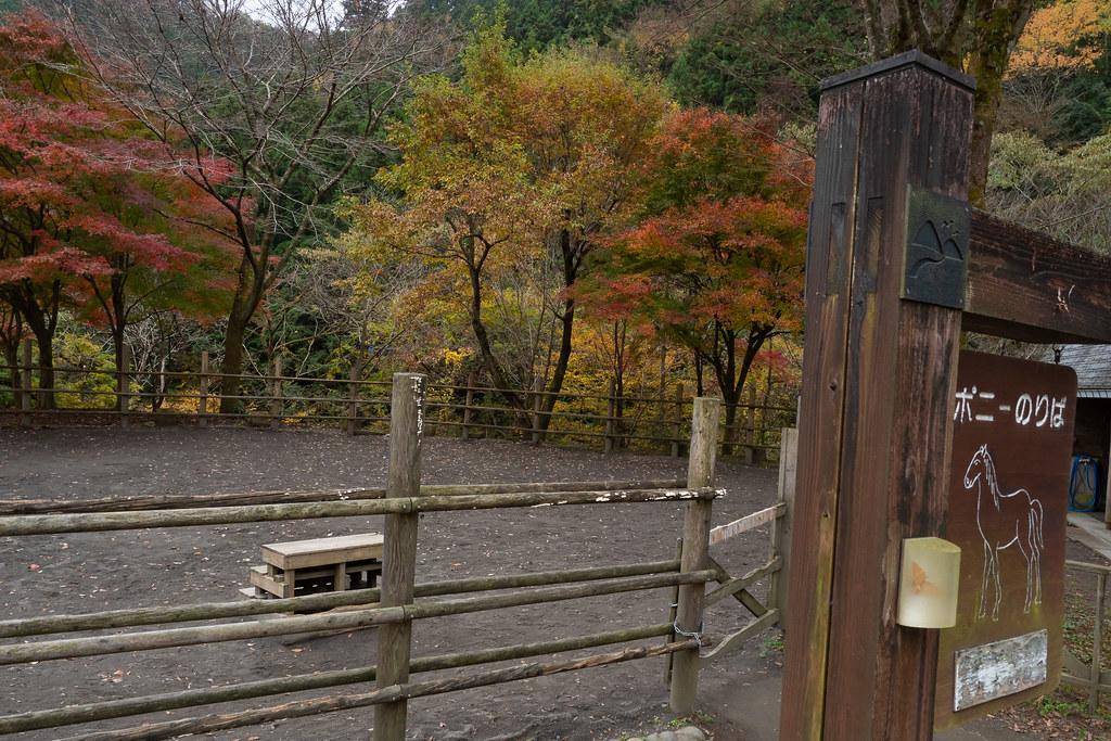 hachiouji_yuyakekoyake-27
