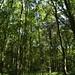 Notton Wood Nature Reserve (89)