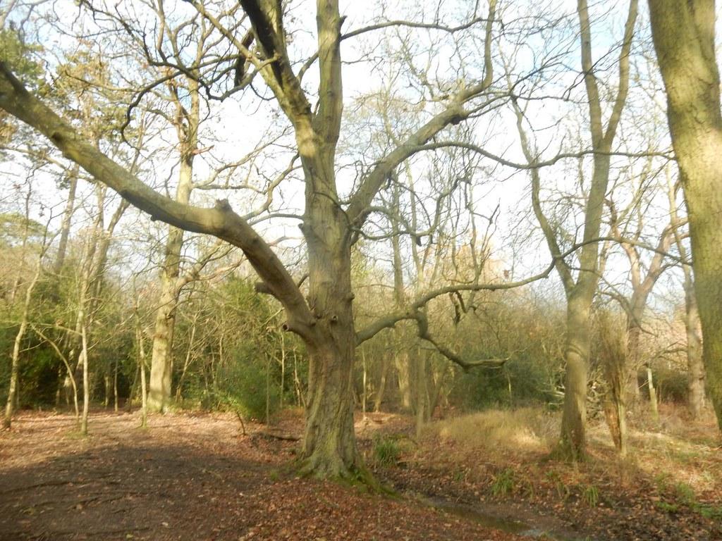 Big Tree Totteridge Circular