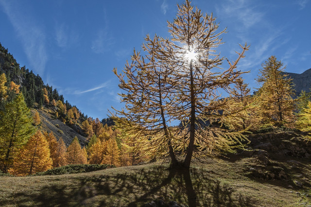 Couleurs d'automne dans le, Canon EOS 70D, Canon EF-S 10-22mm f/3.5-4.5 USM