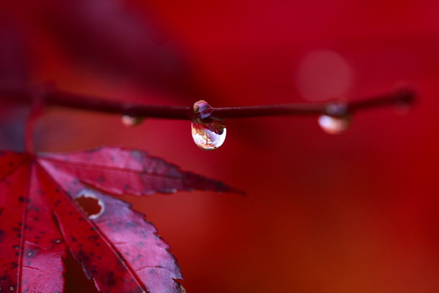 Droplets of Asagiri