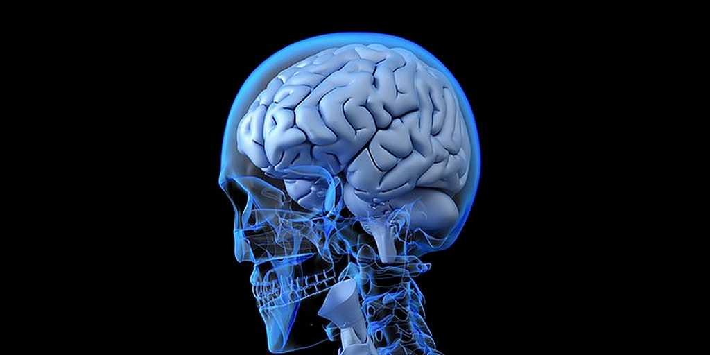 neurones-caractéristiques-découverte-mit