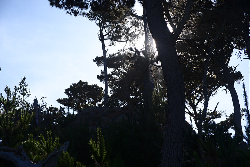 Sunlight, Cannery Point, Point Lobos