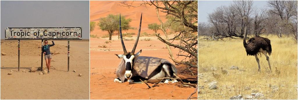 Zwrotnik Koziorożca Namibia