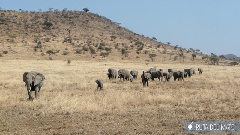 Guia para viajar a Kenia y Tanzania P1140899