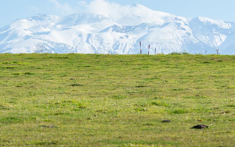 美瑛の草地と山